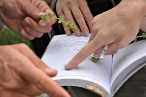 mains sur un dictionnaire des plantes