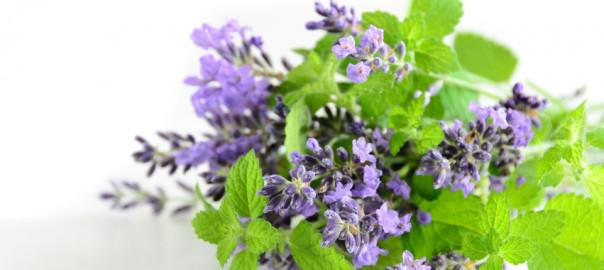 La naturopathie pour soigner les maux de l'été